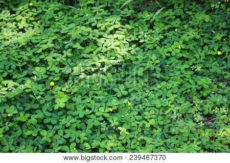 Grass With Flowers And Tree In The Garden, Stock Photo