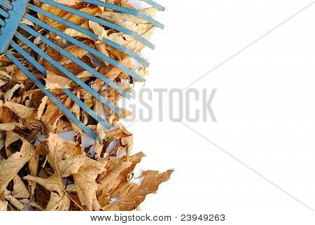 blue rake over yellow dried leaves with space for your text