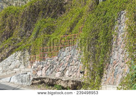 Stone Wall Or Fence With Wild Grapes. Vintage Wall With Natural Floral Frame. Wild Grape On The Wall