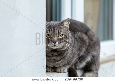 Cute Gray Cat Sitting On The Windowsill Of The House Outdoor. Beautiful Day, Close Up, Copy Space. T