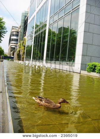 Skyscraper Duck