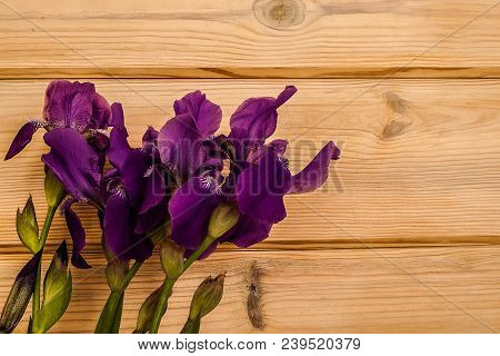 Fresh Purple Irises Lying On A Wooden Textured Background. The Irises Are Just Cut From The Home Gar