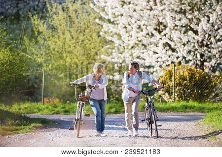 Beautiful Senior Couple With Bicycles Outside In Spring Nature Walking Under Blossoming Trees.