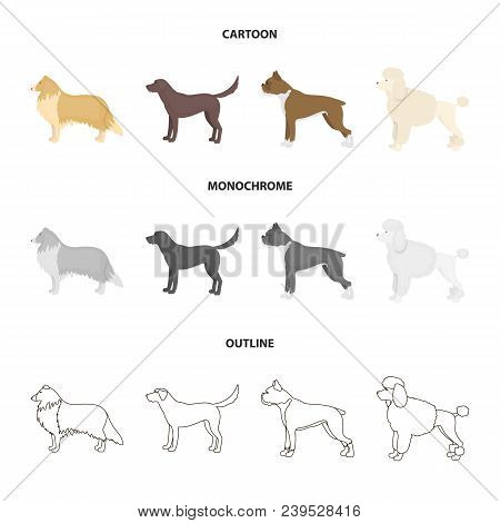 Collie, Labrador, Boxer, Poodle. Dog Breeds Set Collection Icons In Cartoon, Outline, Monochrome Sty