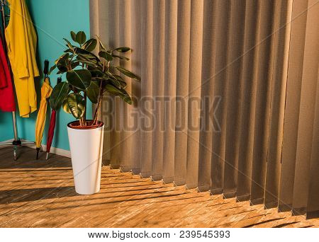 Potted Plant With Green Leaves On Floor With Shadow Near Jalousie