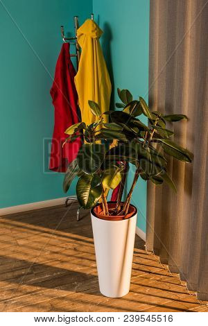 Potted Plant With Green Leaves On Floor Near Jalousie