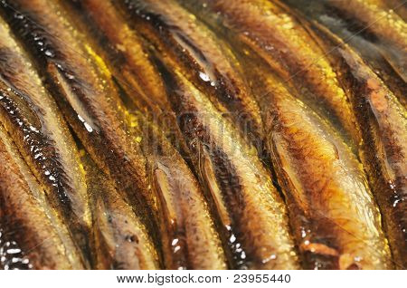 Canned fish in oil, background.