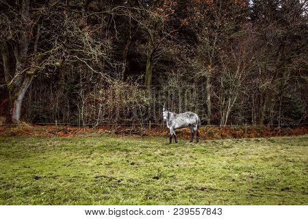 White Horse On A Field With A Fence Near A Forest In The Fall