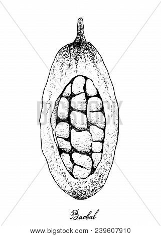 Tropical Fruit, Illustration Of Hand Drawn Sketch Baobab Or Adansonia Fruits Isolated On White Backg