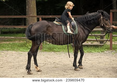Girl Ride On Horse On Summer Day. Child Sit In Rider Saddle On Animal Back. Equine Therapy, Recreati