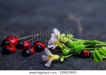 Moody Mood Of Real Lady Bug And Lady Bug Clay Pins With Flower On Black Wood