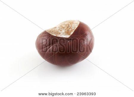 Single Chestnut