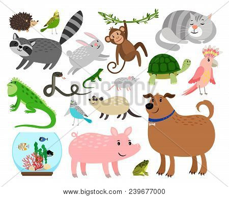 Pets Animals. Cartoon Home Animals Vector Illustration For Animal Shop Like Budgie And Gerbil, Rabbi