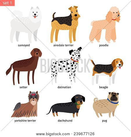 Dog Breeds. Vector Cartoon Dog Collection With Dalmatian And Beagle, Yorkshire Terrier And Dachshund