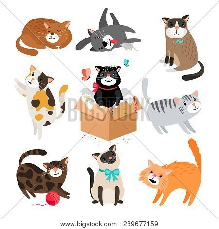 Vector Cats. Simple Cute Cartoon Drawing Different Cat Collection Isolated On White, Sleeping And Si