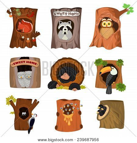 Animals In Hollow Vector Animalistic Character In Tree Hollowed Hole Illustration Set Of Birds Owl W