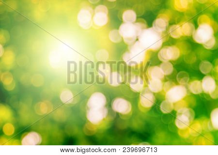 Blur Defocused Nature Blurred Or Bokeh Circles Color Snow Glow Colorful Light Sparkling Under A Tree