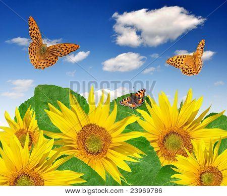sunflower field with butterflies poster