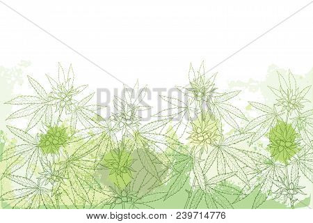Vector Field With Outline Cannabis Sativa Or Cannabis Indica Or Marijuana. Branch, Leaves And Seed O