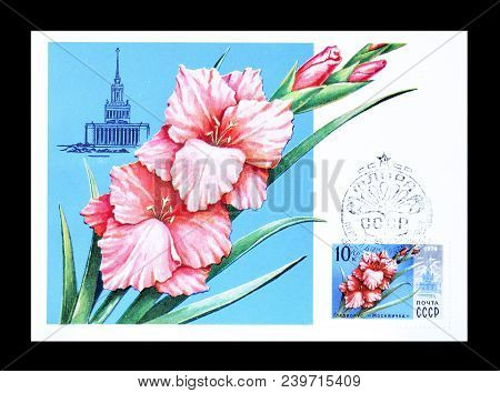 Soviet Union - Circa 1978 : Cancelled Postage Stamp Printed By Soviet Union, That Shows Gladiolus Mo