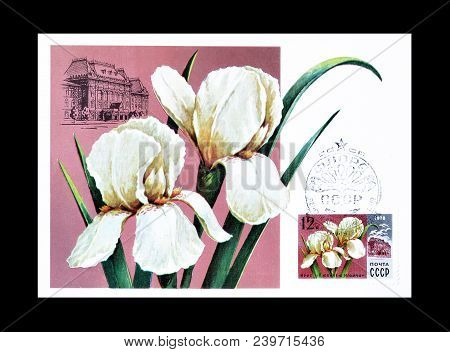 Soviet Union - Circa 1978 : Cancelled Postage Stamp Printed By Soviet Union, That Shows  Iris For Ju