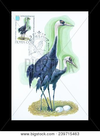 Soviet Union - Circa 1982 : Cancelled Postage Stamp Printed By Soviet Union, That Shows Hooded Crane