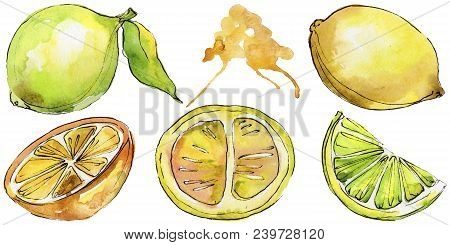 Exotic Citruses Healthy Food In A Watercolor Style Isolated. Full Name Of The Fruit: Citruses. Aquar
