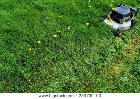 Spring Grass Cutting In The Garden With Rotary Lawn Mower.