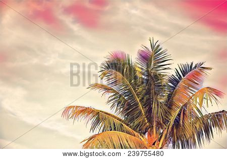 Green Coco Palm Tree On Pink Sky Digital Illustration. Romantic Tropical Vacation Banner Template Wi