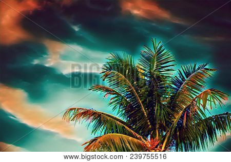 Coco Palm Tree On Sunset Sky Digital Illustration. Green Red Tropical Vacation Banner Template With