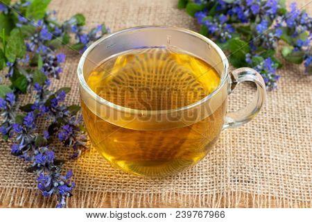 A Cup Of Blue Bugle Tea With Fresh Ajuga Reptans Plant