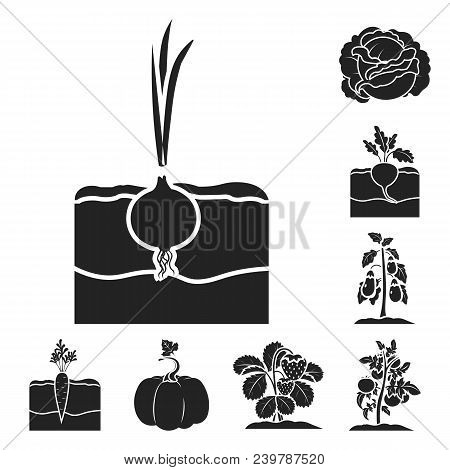 Plant, Vegetable Black Icons In Set Collection For Design. Garden And Harvest Vector Symbol Stock  I