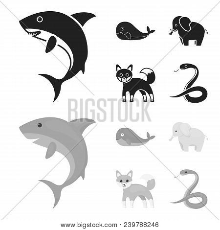 Whale, Elephant, Snake, Fox.animal Set Collection Icons In Black, Monochrom Style Vector Symbol Stoc