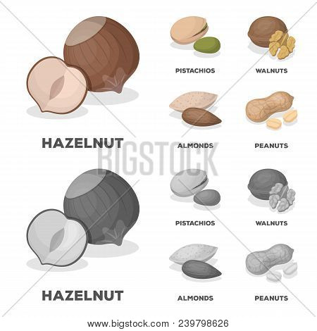 Hazelnut, Pistachios, Walnut, Almonds.different Kinds Of Nuts Set Collection Icons In Cartoon, Monoc