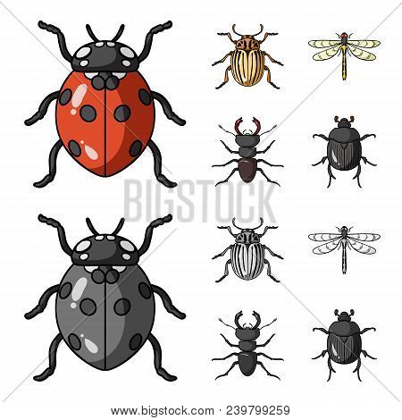 Insect, Bug, Beetle, Paw .insects Set Collection Icons In Cartoon, Monochrome Style Vector Symbol St