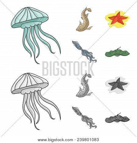 Jellyfish, Squid And Other Species.sea Animals Set Collection Icons In Cartoon, Monochrome Style Vec