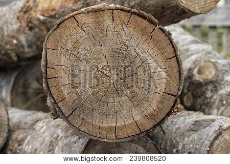 Rough Aged Wood Textured Tree Rings. Black And White Cut Tree Slice Isolated On White Showing Age An