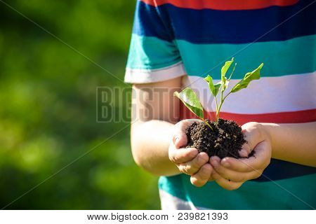Two Hands Of The Children Are Planting The Seedlings Into The Soil.