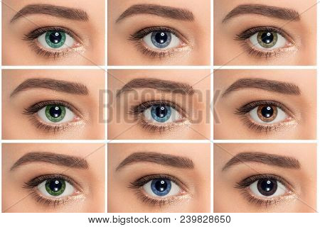 Close Up, Collage Of Eyes With Different Color, Green, Gray And Blue Color Shade On Color Contact Le