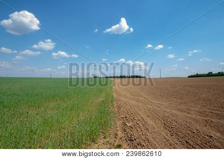 Agricultural Landscape, Arable Crop Field. Arable Land Is The Land Under Temporary Agricultural Crop