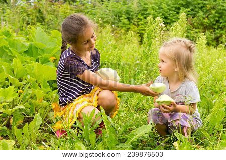 Two Little Girls In A Garden Harvesting Fresh Squashes. The Older Sister Giving The Younger Girl A S