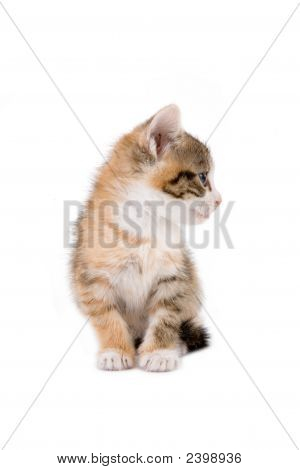 striped kitten lying down and looking right poster