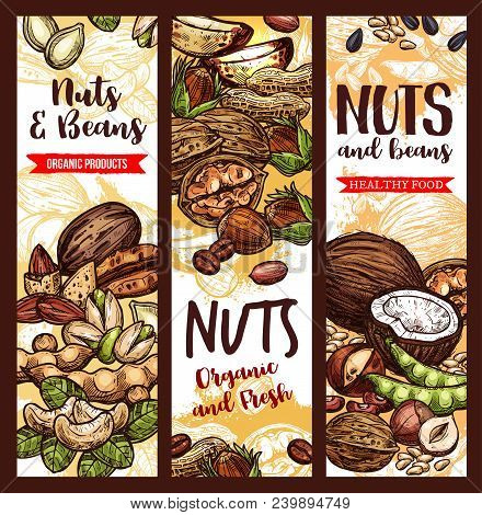 Nuts, Beans And Fruit Seeds Mix Sketch Banners. Vector Design Of Peanut Or Pistachio And Almond, Coc
