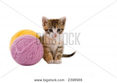 kitten and some ball of yarns isolated on white poster