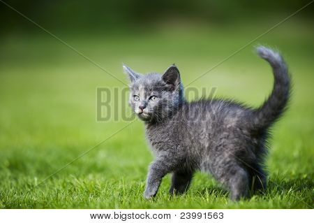 Young cat in the garden