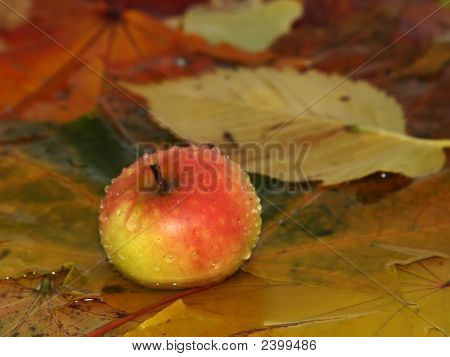 Drops Fall On Apple And Leaves In Water
