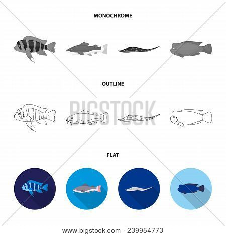 Frontosa, Cichlid, Phractocephalus Hemioliopterus.fish Set Collection Icons In Flat, Outline, Monoch