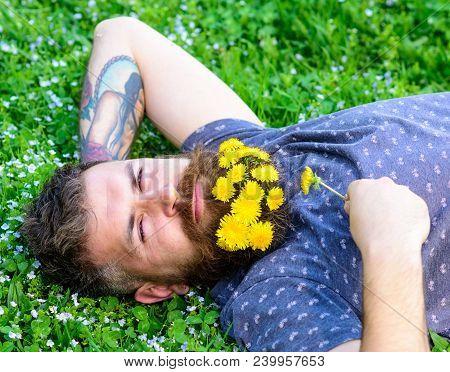 Man With Beard On Calm Face Enjoy Nature. Bearded Man With Dandelion Flowers Lay On Meadow, Grass Ba