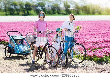 Family On Bike In Tulip Flower Fields, Holland