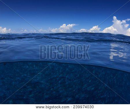 Ocean sea fish half and half